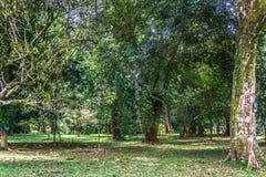 Πράσινος κήπος με το παλαιό μεγάλο δέντρο και άλλο πράσινα δέντρα με τη φωτογραφία λιβαδιών που λαμβάνεται σε Kebun Raya Bogor Ιν Στοκ εικόνα με δικαίωμα ελεύθερης χρήσης
