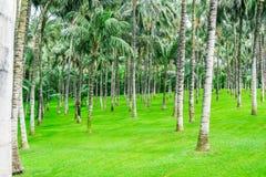 Πράσινος κήπος φοινικών Στοκ Εικόνες