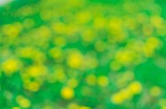 πράσινος κίτρινος ανασκόπ&e Στοκ φωτογραφίες με δικαίωμα ελεύθερης χρήσης