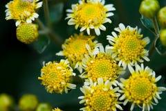 πράσινος κίτρινος Στοκ Εικόνα