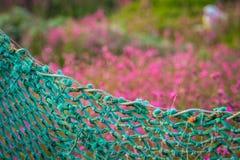 Πράσινος καθαρός φράκτης στη Cornish επαρχία Στοκ εικόνες με δικαίωμα ελεύθερης χρήσης