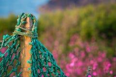 Πράσινος καθαρός φράκτης στη Cornish επαρχία Στοκ Φωτογραφία