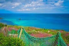 Πράσινος καθαρός φράκτης στη Cornish επαρχία Στοκ Εικόνες