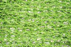 Πράσινος καθαρός Στοκ Εικόνες