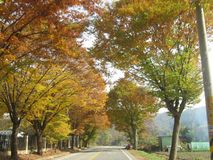 πράσινος καιρός δέντρων οδικών ήλιων φθινοπώρου κίτρινος Στοκ φωτογραφία με δικαίωμα ελεύθερης χρήσης