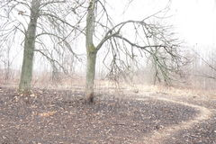 πράσινος καιρός δέντρων οδικών ήλιων φθινοπώρου κίτρινος Στοκ Εικόνες