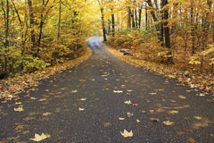 πράσινος καιρός δέντρων οδικών ήλιων φθινοπώρου κίτρινος Στοκ φωτογραφίες με δικαίωμα ελεύθερης χρήσης