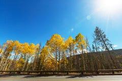 πράσινος καιρός δέντρων οδικών ήλιων φθινοπώρου κίτρινος Στοκ Φωτογραφία