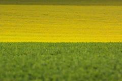 Πράσινος και κίτρινος τομέας φύσης Στοκ Εικόνα