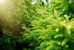 Πράσινος και φρέσκος στοκ φωτογραφία με δικαίωμα ελεύθερης χρήσης