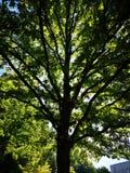 Πράσινος και φρέσκος στοκ εικόνα