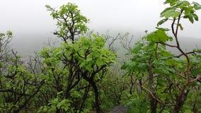 Πράσινος και pleasnt στα μάτια Στοκ εικόνα με δικαίωμα ελεύθερης χρήσης