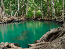 Πράσινος καταρράκτης ποταμών λιμνών νερού με το δέντρο ρίζας στο τραγούδι Nam, Krabi, Ταϊλάνδη Tha Pom Klong Στοκ εικόνες με δικαίωμα ελεύθερης χρήσης