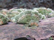 Πράσινος καλυμμένος βρύο γδυμένος πορτοκάλι μύκητας υποστηριγμάτων στοκ φωτογραφία