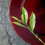 πράσινος κόκκινος στρογγυλός κλαδίσκος πιάτων Στοκ εικόνες με δικαίωμα ελεύθερης χρήσης