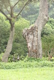 Πράσινος κόσμος και γερά δέντρα στο πάρκο Κίνα στοκ φωτογραφία με δικαίωμα ελεύθερης χρήσης