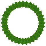 Πράσινος κύκλος από τα φύλλα που απομονώνεται στο λευκό Στοκ Εικόνα
