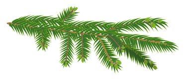 Πράσινος κλάδος του δέντρου έλατου που απομονώνεται στο άσπρο υπόβαθρο Στοκ Εικόνα
