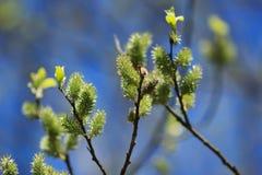 Πράσινος κλάδος Στοκ Εικόνες