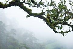 Πράσινος κλάδος Στοκ φωτογραφίες με δικαίωμα ελεύθερης χρήσης