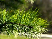 Πράσινος κλάδος Στοκ εικόνες με δικαίωμα ελεύθερης χρήσης