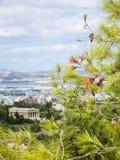 πράσινος κλαδίσκος και άποψη του ναού Hephaestus Στοκ Εικόνες