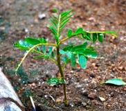 πράσινος λίγο φυτό Στοκ φωτογραφίες με δικαίωμα ελεύθερης χρήσης