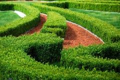 Πράσινος λαβύρινθος θάμνων Στοκ Εικόνες