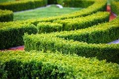Πράσινος λαβύρινθος θάμνων Στοκ φωτογραφία με δικαίωμα ελεύθερης χρήσης