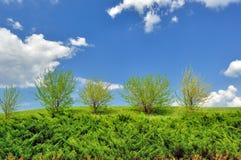 πράσινος λόφος θάμνων Στοκ Εικόνα