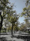 Πράσινος λόφος με τις εγκαταστάσεις και τα δέντρα στοκ εικόνες με δικαίωμα ελεύθερης χρήσης