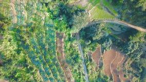 Πράσινος λόφος πεζουλιών ρυζιού σε Himalayan Νεπάλ από τον αέρα φιλμ μικρού μήκους