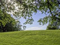 Πράσινος λόφος που πλαισιώνεται από τους θάμνους και τους κλάδους στοκ φωτογραφίες με δικαίωμα ελεύθερης χρήσης