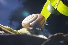 πράσινος μίσχος σαλιγκα& στοκ φωτογραφία με δικαίωμα ελεύθερης χρήσης