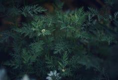 πράσινος μακρο κήπος κινηματογραφήσεων σε πρώτο πλάνο φύλλων Στοκ Εικόνα