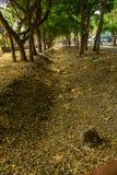 Πράσινος μεθύστακας Στοκ Φωτογραφίες
