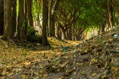 Πράσινος μεθύστακας Στοκ Εικόνα