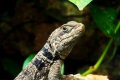 Πράσινος μικρός στενός επάνω gecko σαυρών Στοκ φωτογραφία με δικαίωμα ελεύθερης χρήσης