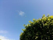 Πράσινος μπλε ουρανός φεγγαριών φύλλων δέντρων Στοκ Φωτογραφίες
