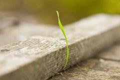 πράσινος νεαρός βλαστός σ Στοκ Φωτογραφίες