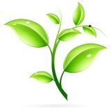 πράσινος νεαρός βλαστός Στοκ εικόνες με δικαίωμα ελεύθερης χρήσης