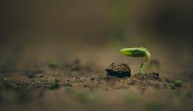 πράσινος νεαρός βλαστός στοκ φωτογραφία με δικαίωμα ελεύθερης χρήσης