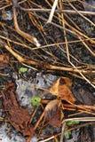 πράσινος νεαρός βλαστός Στοκ Εικόνα