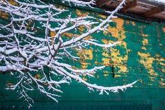 Πράσινος ξύλινος τοίχος σιταποθηκών Emeralg πίσω από το χιονώδη κλάδο Στοκ Φωτογραφία