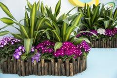 Πράσινος ξύλινος φράκτης λουλουδιών Στοκ εικόνα με δικαίωμα ελεύθερης χρήσης