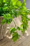 Πράσινος, οργανικός μαϊντανός στοκ φωτογραφία