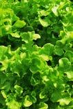 πράσινος οργανικός στοκ φωτογραφία με δικαίωμα ελεύθερης χρήσης