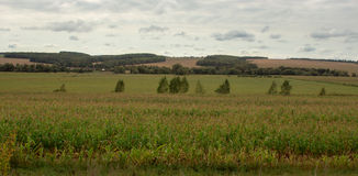 πράσινος ουρανός πεδίων Στοκ φωτογραφία με δικαίωμα ελεύθερης χρήσης
