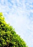πράσινος ουρανός φρακτών π&u Στοκ Φωτογραφίες