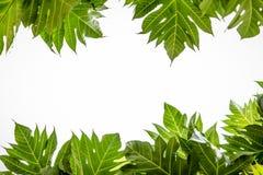 πράσινος ουρανός φύλλων Στοκ εικόνες με δικαίωμα ελεύθερης χρήσης